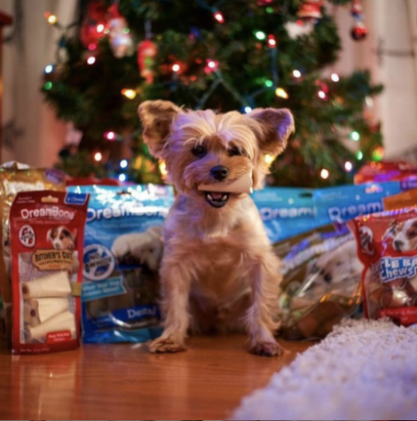 Presents for Your Pets This Christmas